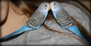 parakeet, birds, animals, discovering different